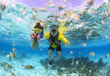 Snorkeling & Stingray City Adventure
