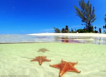 Starfish Point & Rum Point Club