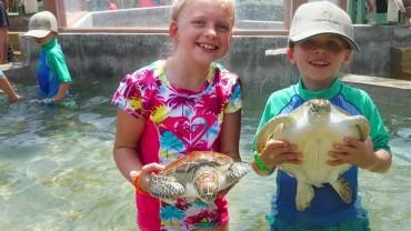 Turtle Farm